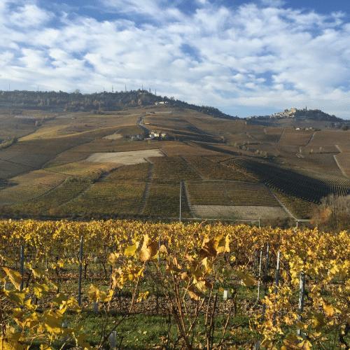 vignoble-piémont